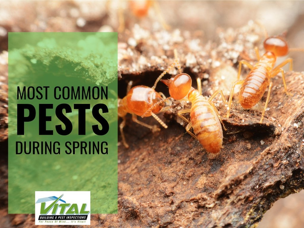 most common pests during spring