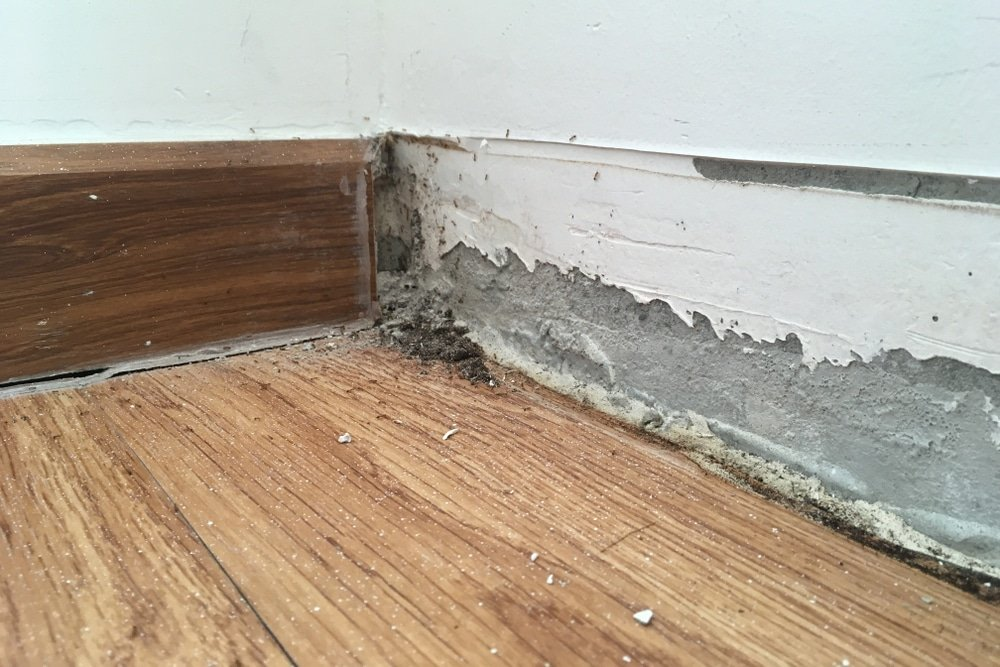 timber floor damage report