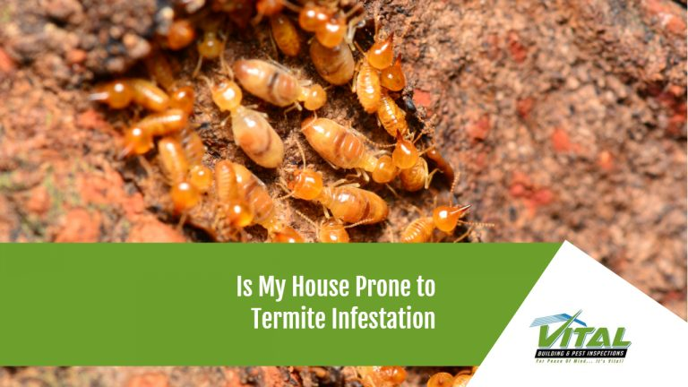 Is My House Prone to Termite Infestation