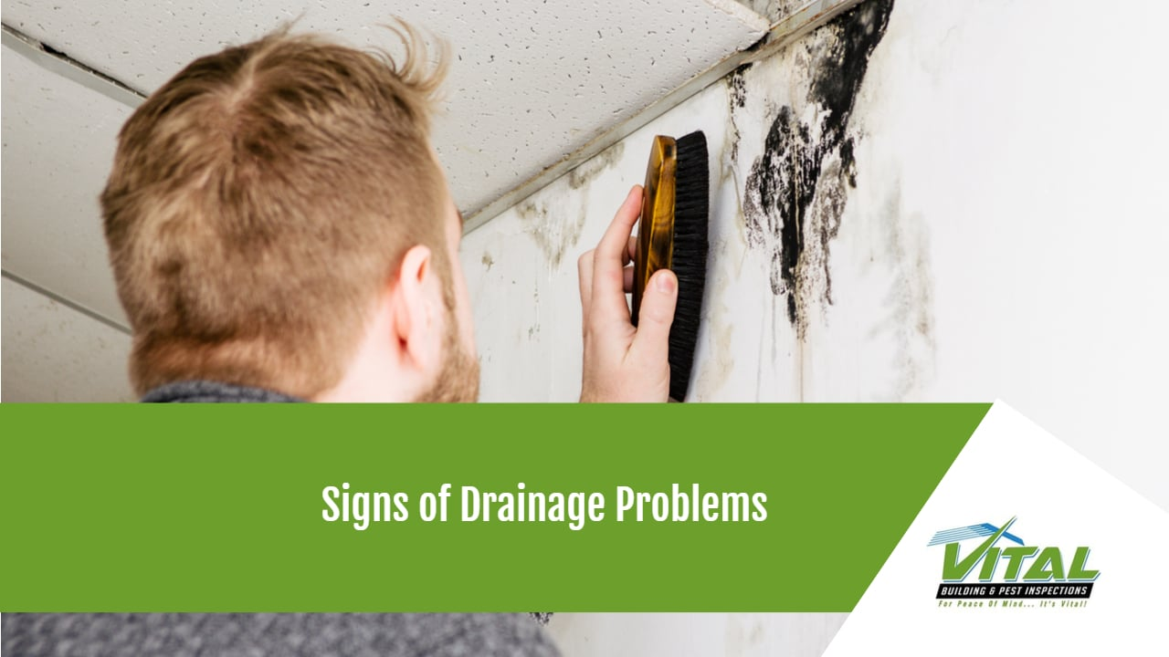 Signs of Drainage Problems