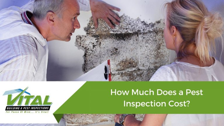 Pest inspection cost