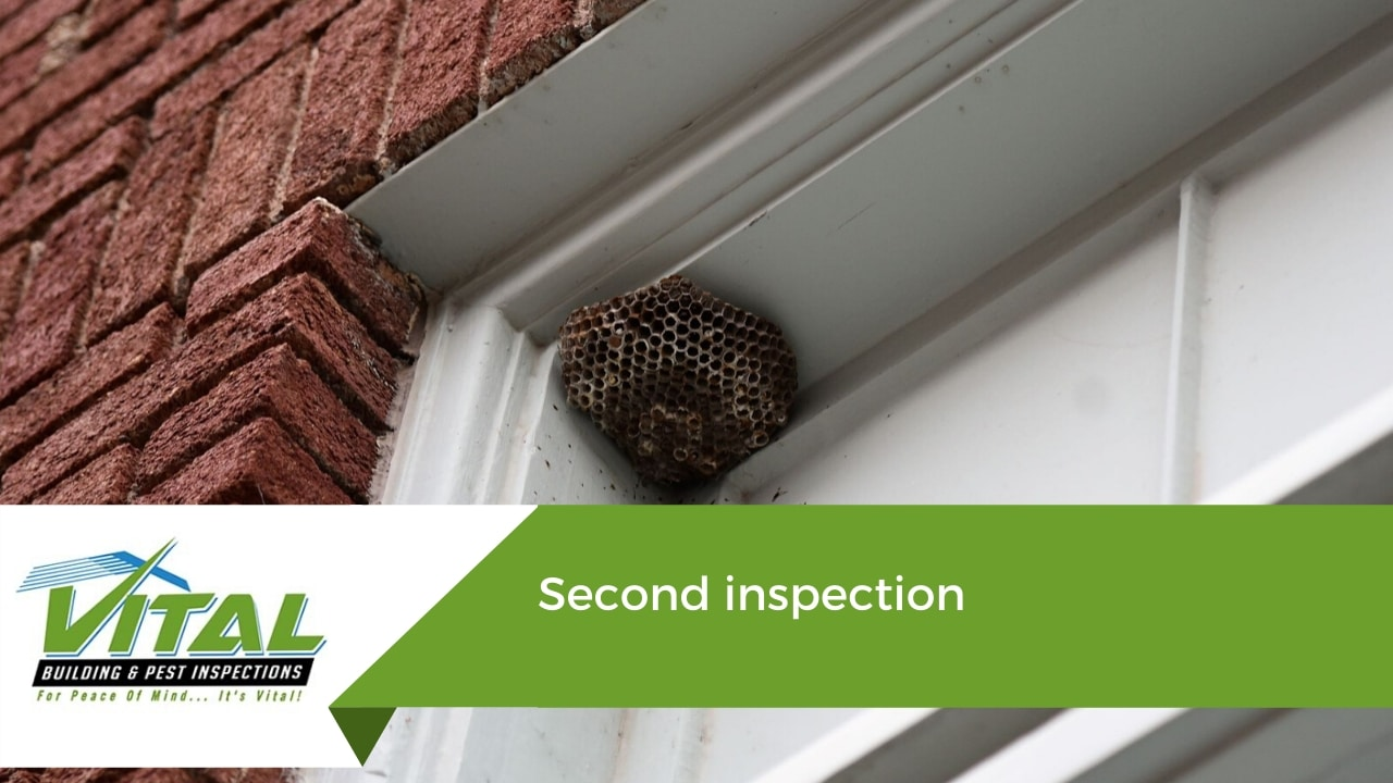 second pests inspection