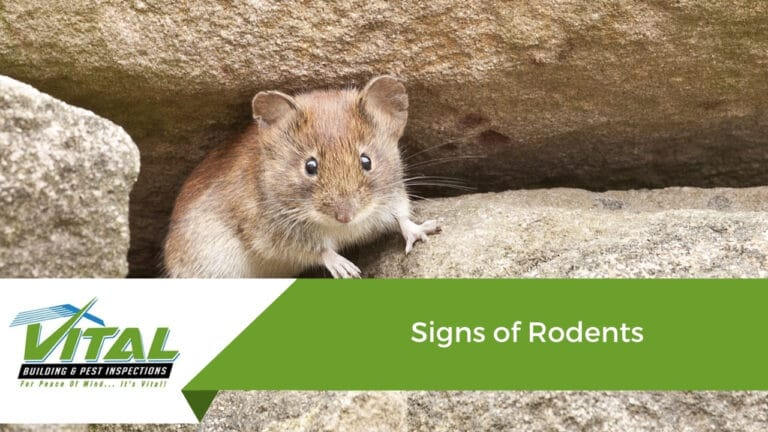 Signs of Rodents