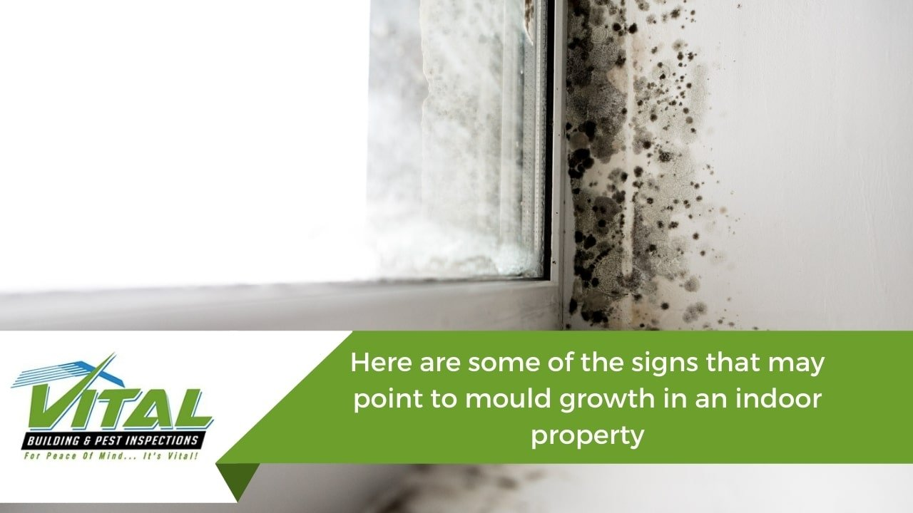 Here are some of the signs that may point to mould growth in an indoor property