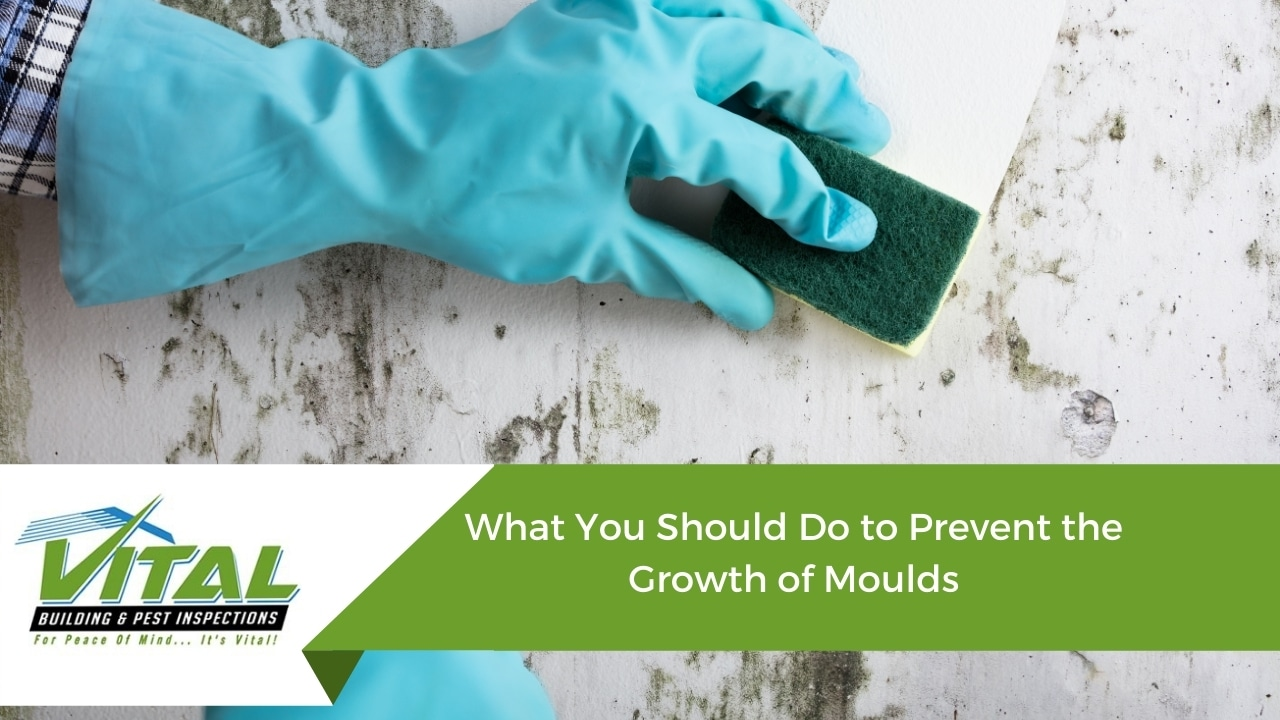 What You Should Do to Prevent the Growth of Moulds