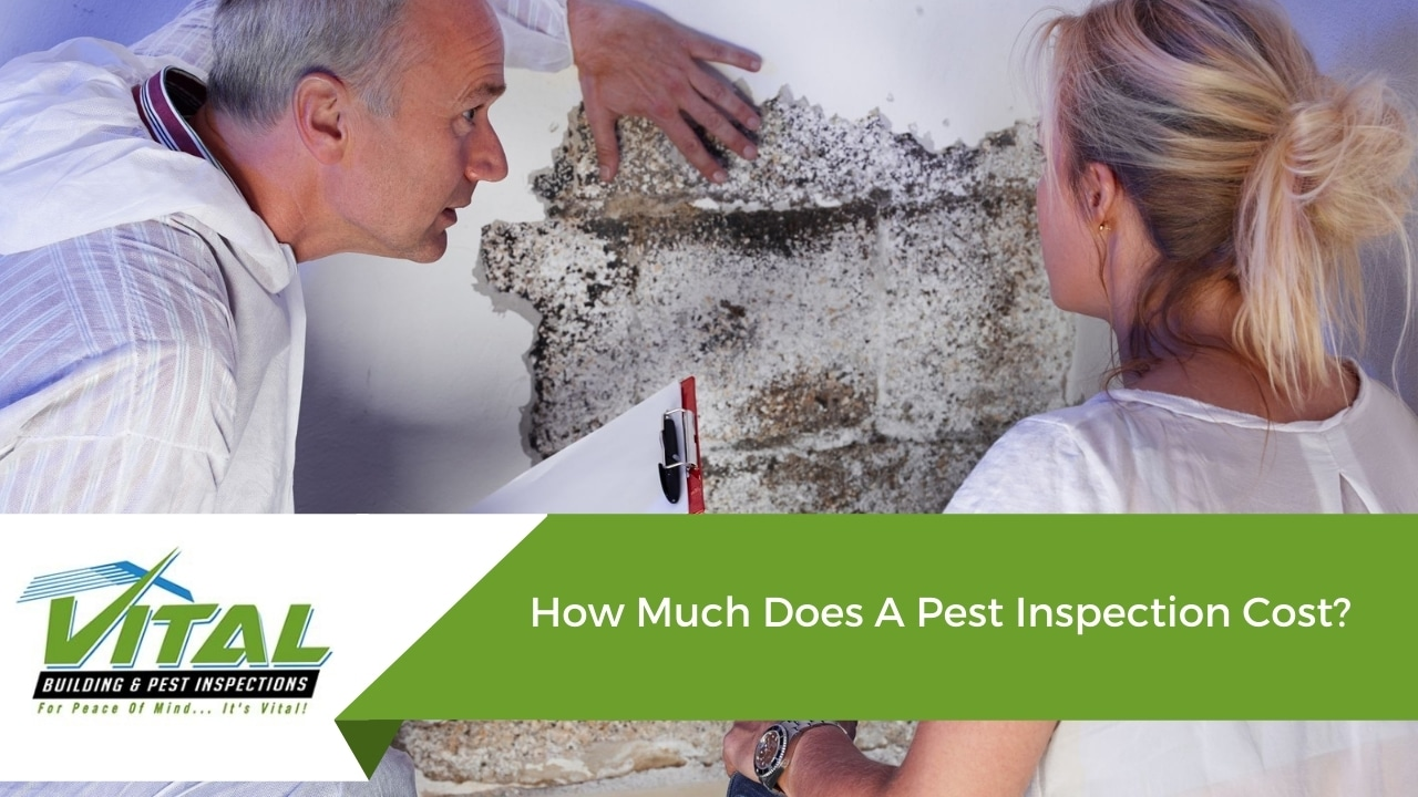 How Much Does A Pest Inspection Cost