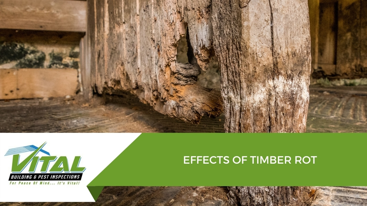 EFFECTS OF TIMBER ROT