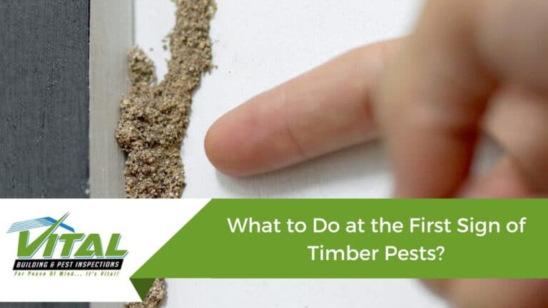 What to Do at the First Sign of Timber Pests