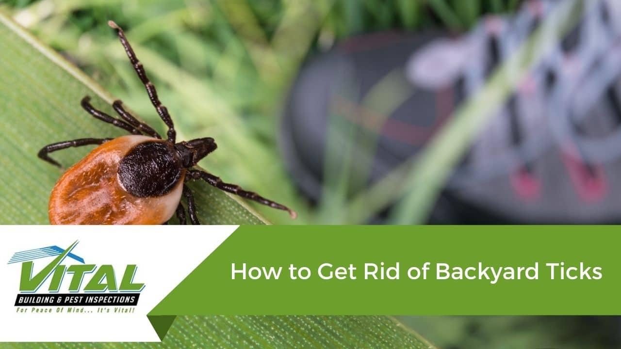 How to Get Rid of Backyard Ticks