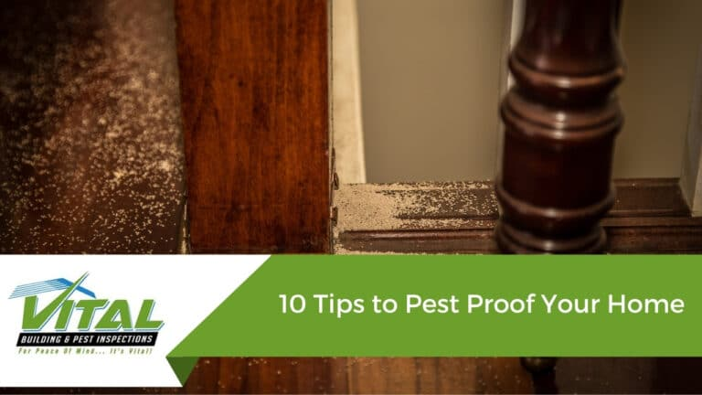 10 Tips to Pest Proof Your Home
