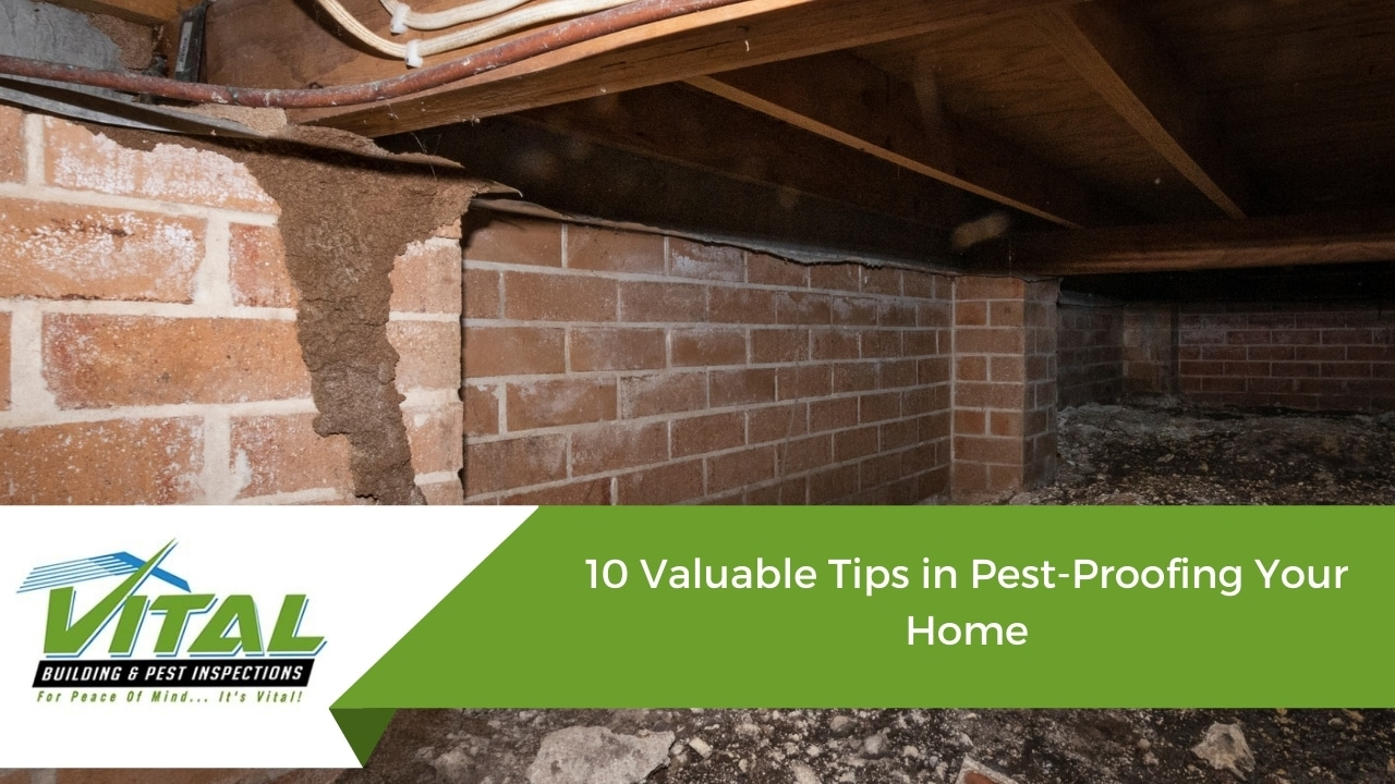 10 Valuable Tips in Pest-Proofing Your Home