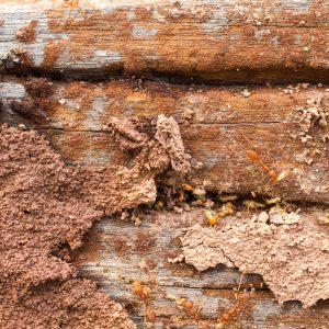 Timber pest inspections sydney